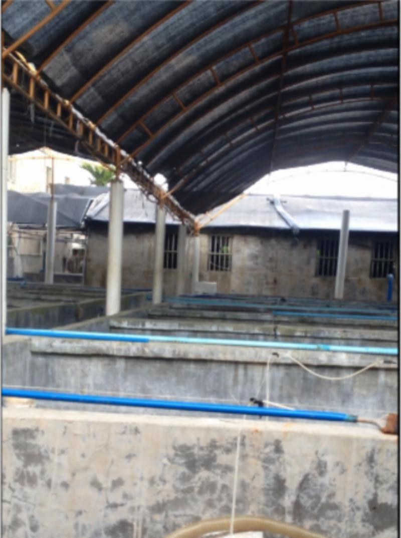 海螺和石斑鱼 海水养殖